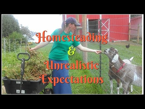 Homesteading & Unrealistic Expectations