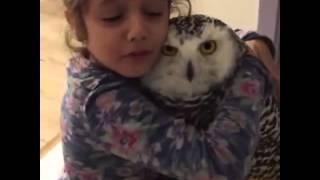 პატარა გოგონა და ბუ