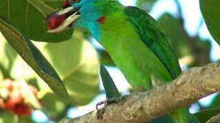 Bangla Song - Vebo Na Go Ma