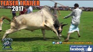 Bull Fight Trailer -2017-Bangladesh Gulapgonj Sylhet