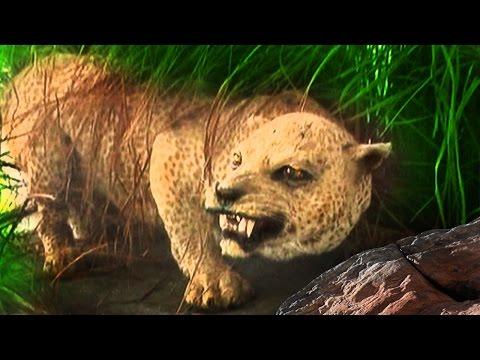 18 Animals Lost to Extinction