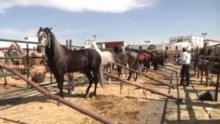 Cartaya celebró su XVI Feria del Caballo
