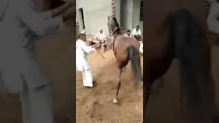 Mair dance