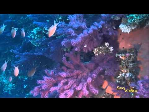 Xxx Mp4 Egadi Islands Sicily In HD By Videocom Italia 3gp Sex