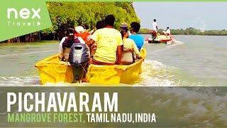 Pichavaram Mangrove Forest, Tourist Place in Tamil Nadu , India