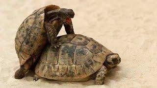 5 Most Bizarre Animal Mating Rituals