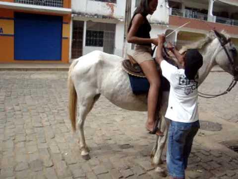 Cavalos e Éguas