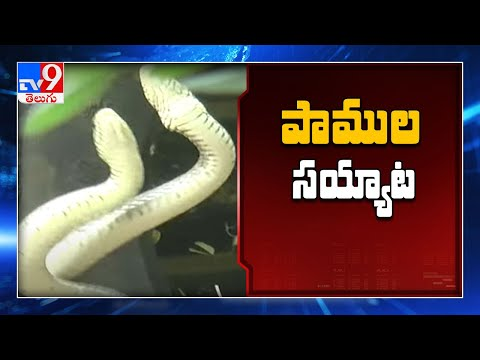 Xxx Mp4 Snake Dance In Tirumala TV9 3gp Sex