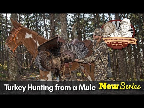 VLOG #11: Turkey Hunting From a MULE