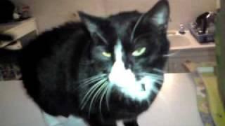 saut raté pour un chat pas réveillé!.MP4