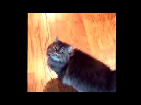 Xxx Mp4 HDvd9 Co Yasss Funny Cat Video 10 Seconds 3gp Sex