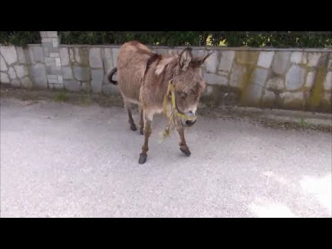 Xxx Mp4 Donkey Meets Woman And Dog Doberman Scared Of Donkey 3gp Sex