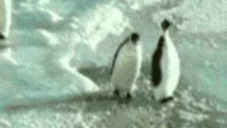 Penguin Slap! (with funny sound effects)