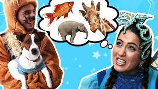 نطنط نهار وأرنوب الحبوب | حيوان أليف | Pets