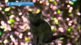 Новогодние коты соберут помощь для бездомных