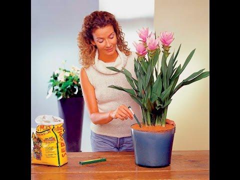 Как ухаживать домашними цветами и