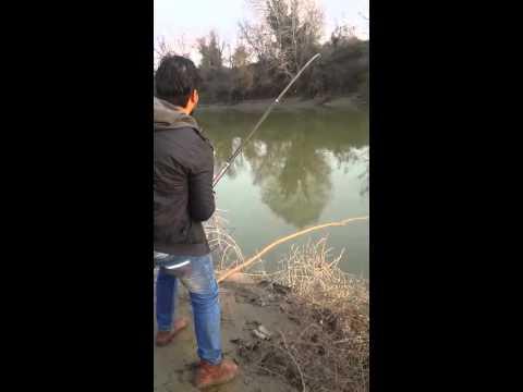 Sakarya nehri yayın balığı avı
