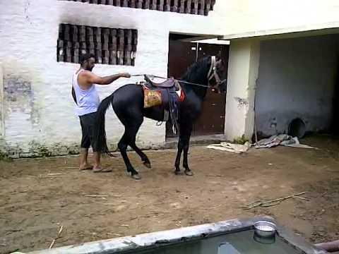 Xxx Mp4 Horse Dance By Muktiar Singh 3GP 3gp Sex