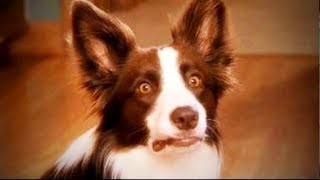 Coward Dogs 🐶🙈Funny Dogs Scared of Random Things (Part 1) [Funny Pets]