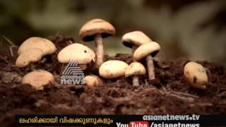 Poison mushrooms are used for intoxication | Asianet News investigation