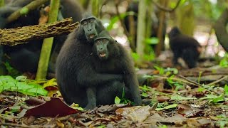 Cute Affectionate Monkeys | Lands of the Monsoon | BBC