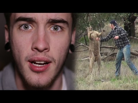 Xxx Mp4 MAN PUNCHES A KANGAROO IN THE FACE TO RESCUE HIS DOG 3gp Sex