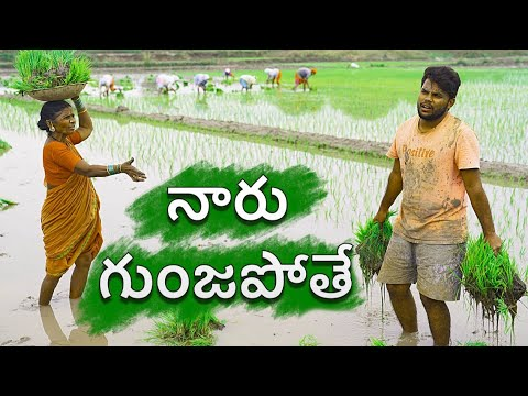 Xxx Mp4 Village Paddy Farming My Village Show Sankranti Special Comedy 3gp Sex