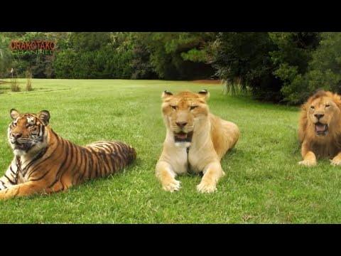 LOS 10 ANIMALES HÍBRIDOS MÁS INCREÍBLES DEL MUNDO