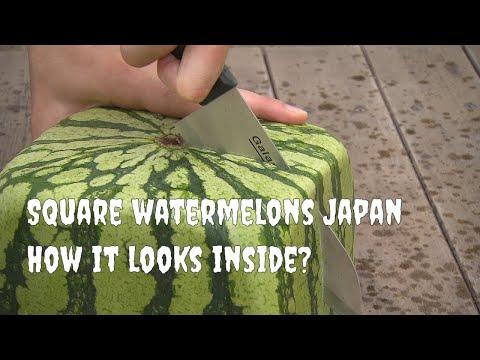 Square watermelons Japan. English version