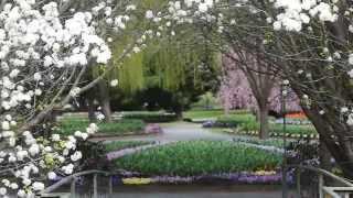 Tulip Top Gardens 2014