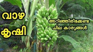 വാഴ കൃഷിയിലെ ചില നാട്ടറിവുകള് Banana Farming Agriculture Tips