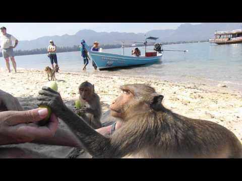 Sozenbaby on Monkey Island