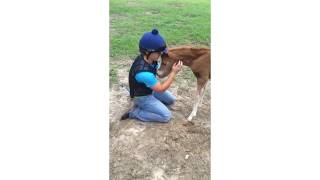 World's Nicest Horse Cuddles With Girl (Storyful, Wild Animals)