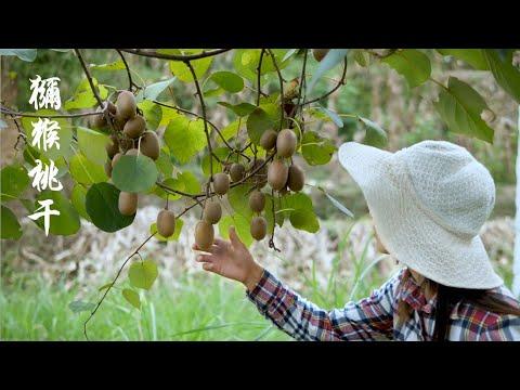 翻山越嶺來摘山上的獼猴桃,新鮮果子不� 直接吃,摘回家放櫃子裏讓它變熟
