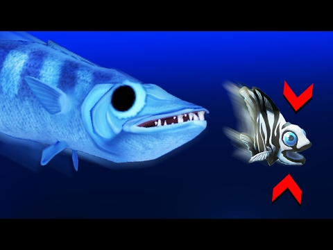 THE LEGENDARY BARRACUDA Feed And Grow Gameplay NEW UPDATE