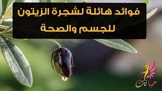 فوائد هائلة لشجرة الزيتون للجسم والصحة