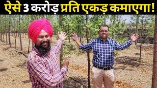किसान ऐसे 3 करोड़ कमाएगा चंदन की खेती से|Chandan Tree Farming|Sandalwood in india