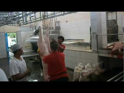Actual video of hog evisceration and bleeding