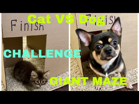 Xxx Mp4 Giant Maze Kitten Cat Vs Puppy Dog Challenge Who Will Win 3gp Sex