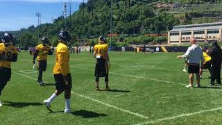 Steelers LBs Vince Williams, Tyler Matakevich & others practice at minicamp