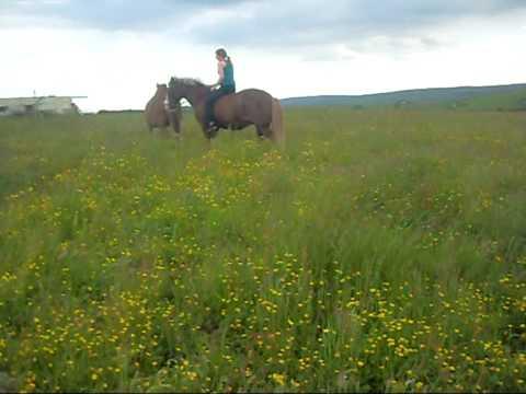 Xxx Mp4 Me And My Horse RIP Petra X X 3gp Sex