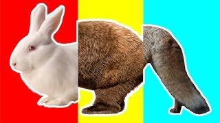 Wrong Heads Wild Animals Speed Matching Game Animals Bear Fox Kangaloo Rabbit Learn Animals for Kids