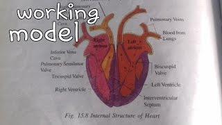 ✔👍❤Working heart model || heart science project || 10th class || bio working model project