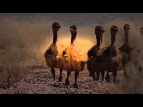 Africa Episode 1 Kalahari with David Attenborough   Documentary