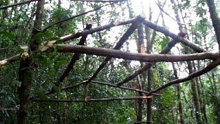 Vivendo nas árvores (construindo casa na árvore, plataforma) parte 1