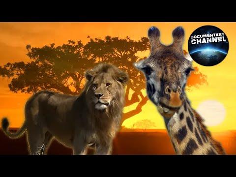 WILDLIFE IN SERENGETI Wild animals Serengeti National Park