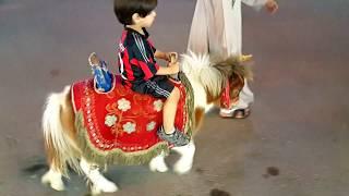 حصان حمود