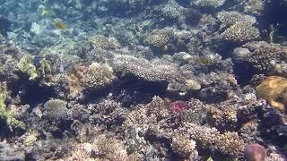 Red Sea Underwater Life