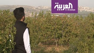 العربية في الجليل |  الجش أرض التفاح والكرز