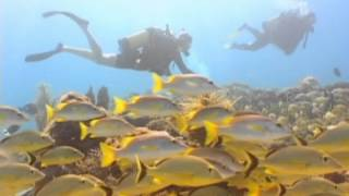 Fishing under ice (ORIGINAL),Underwater Fish - ,free video download